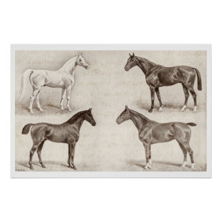 Vintage Horses - Horse and Pony Templates  horse Poster
