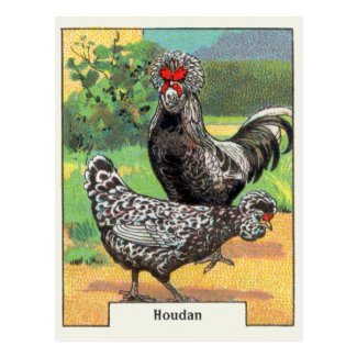 Vintage Houdan Chicken Postcard