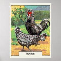 Vintage Houdan Chicken Poster