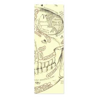 Vintage Human Anatomy Anterolateral Skull Segment Mini Business Card