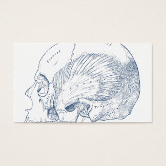 Vintage Human Anatomy Drawing Temporal Muscle Blue Business Card