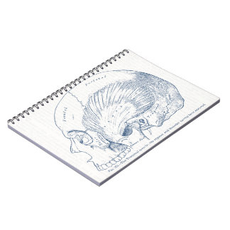 Vintage Human Anatomy Drawing Temporal Muscle Blue Notebook