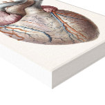 Vintage Human Anatomy Heart Organs Healthy Canvas Print