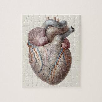 Vintage Human Anatomy Heart Organs Healthy Jigsaw Puzzle