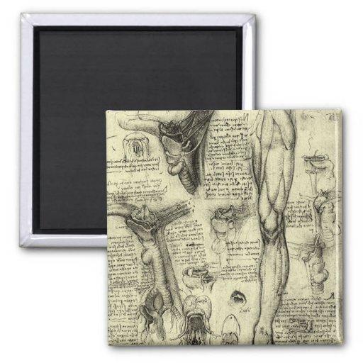 Vintage Human Anatomy Larynx Leg Leonardo da Vinci 2 Inch Square Magnet
