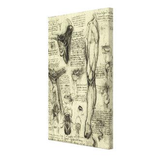 Vintage Human Anatomy Larynx Leg Leonardo da Vinci Canvas Print