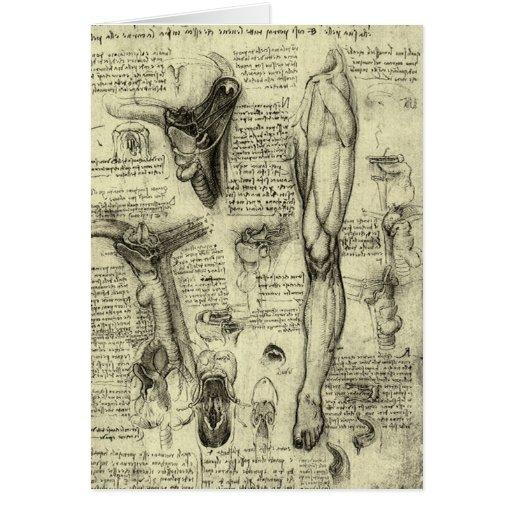 Vintage Human Anatomy Larynx Leg Leonardo da Vinci Greeting Card
