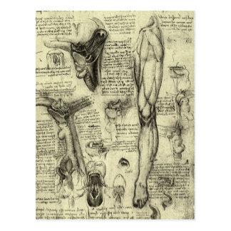 Vintage Human Anatomy Larynx Leg Leonardo da Vinci Postcards