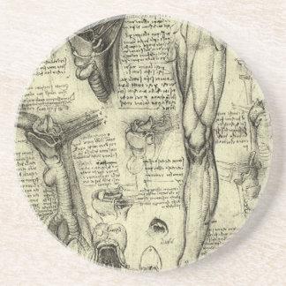 Vintage Human Anatomy Larynx Leg Leonardo da Vinci Sandstone Coaster