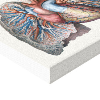 Vintage Human Anatomy Lungs Heart Organs Blood Canvas Prints