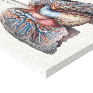 Vintage Human Anatomy Lungs Heart Organs Blood Canvas Print