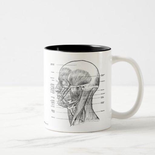 Vintage - Human Anatomy Muscles (Face, Head, Neck) Coffee Mug