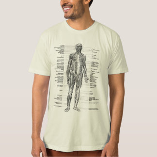 Vintage - Human Anatomy Muscles Front & Back Views Tee Shirts