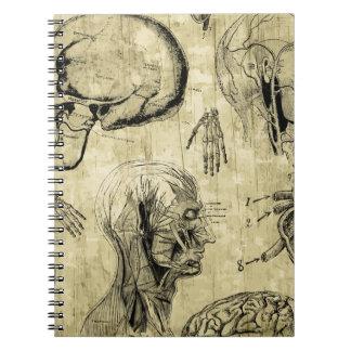 Vintage Human Anatomy Notebook