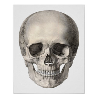 Vintage Human Anatomy Skull, Halloween Skeleton Poster