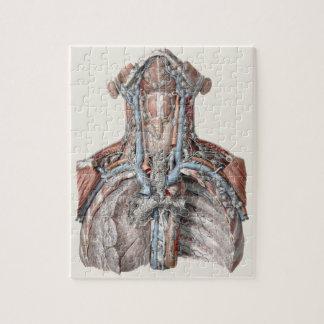 Vintage Human Anatomy Throat, Neck, Chest, Ribs Jigsaw Puzzle