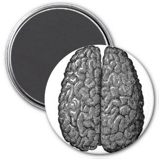 Vintage Human Brain Illustration 3 Inch Round Magnet