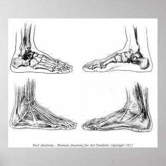 Vintage - Human Foot Anatomy Poster