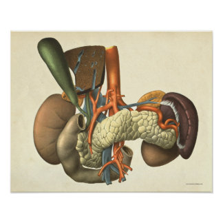 Vintage Human Organ System Anatomy Print