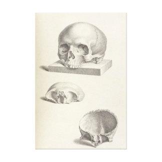 Vintage Human Skull 24x36 Canvas Print