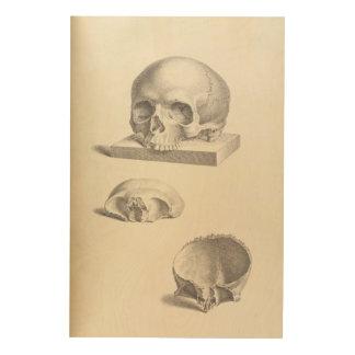 Vintage Human Skull 24x36 Wood Wall Art