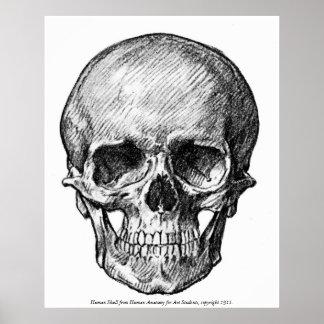 Vintage - Human Skull Image Poster