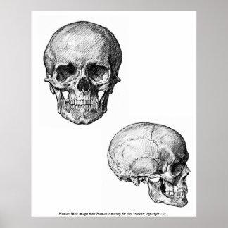 Vintage - Human Skull Images Poster