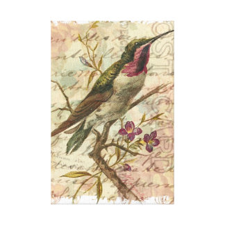Vintage Hummingbird Gallery Wrap Canvas