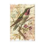Vintage Hummingbird Canvas Print