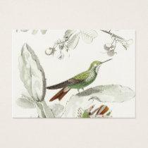 Vintage Hummingbird Illustration - 1800's Birds