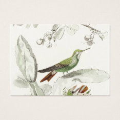 Vintage Hummingbird Illustration - 1800's Birds Business Card at Zazzle