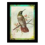 Vintage Hummingbird Post Card