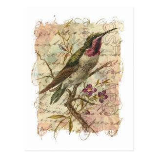 Vintage Hummingbird Post Cards