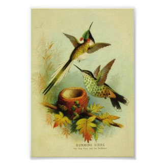 Vintage Hummingbird Print