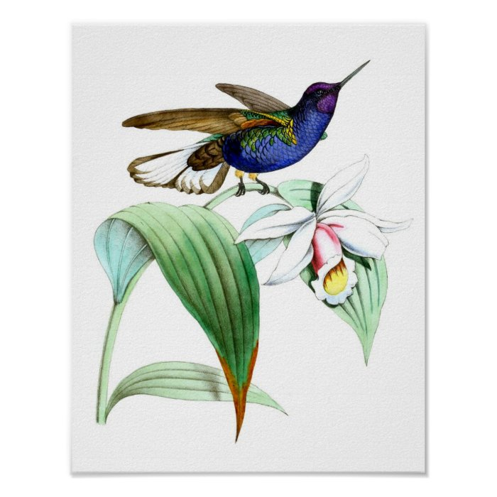 Vintage hummingbird print no 1 spring wall decor zazzle for Hummingbird decor