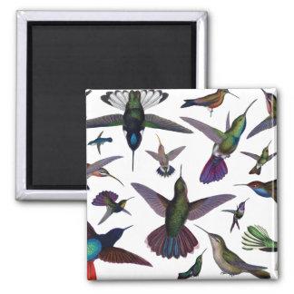 Vintage Hummingbirds 2 Inch Square Magnet