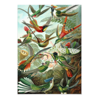 Vintage Hummingbirds by Ernst Haeckel Invitations
