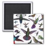 Vintage Hummingbirds Fridge Magnet