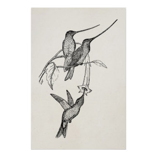 Vintage Hummingbirds Long Beaks Personalized Birds Poster