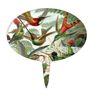 Vintage hummingbirds scientific illustration cake topper