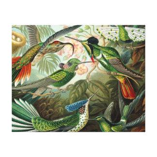 Vintage hummingbirds scientific illustration canvas print