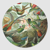 Vintage hummingbirds scientific illustration classic round sticker