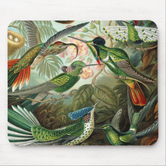 Vintage hummingbirds scientific illustration mouse pad