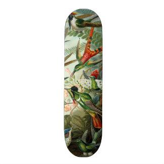 Vintage hummingbirds scientific illustration skateboard deck