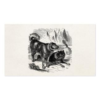 Vintage Husky Sled Dog 1800s Huskies Alaskan Dogs Business Card