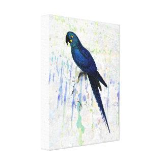 Vintage Hyacinth Macaw on Rainbow Grunge Backgrou Canvas Print