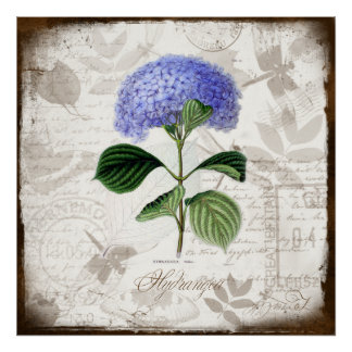Vintage Hydrangea Posters