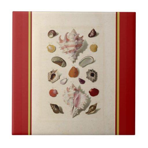 Vintage Illustrated Seashell Tile
