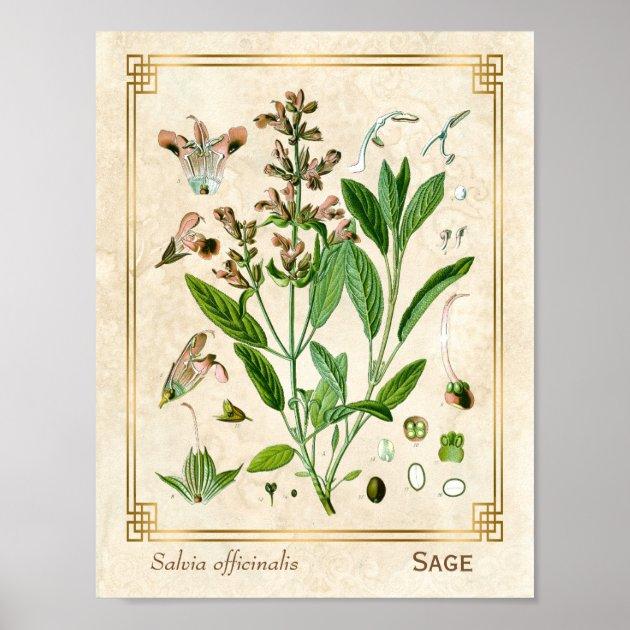 Vintage Illustration Pflanzen Poster