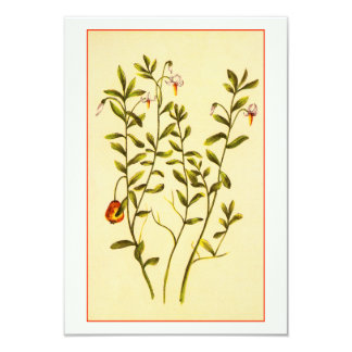 Vintage Illustration of a Cranberry Plant 3.5x5 Paper Invitation Card